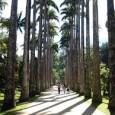 O Jardim Botânico do Rio de Janeiro participa, este ano, do festival internacional de divulgação científica Pint of Science, criado na Inglaterra em 2013 e que leva cientistas de renome […]