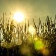 Atualmente, cerca de 30% da população mundial já é exposta, durante pelo menos 20 dias por ano, a temperaturas e umidade atmosférica que comprometem significativamente a termorregulação do organismo, com […]