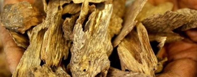 A fragrância de milhares de incensos pairava pela apertada entrada da loja Wing Lee Joss Sticks & Sandalwood Company, um negócio familiar tradicional do bairro de Yau Ma Tei em […]