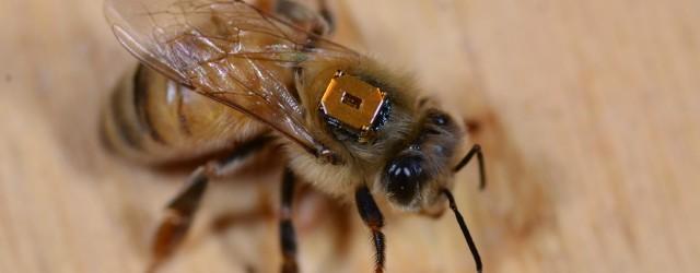 """Dois novos estudos publicados nesta quinta-feira (29) na revista """"Science"""" mostram que os agrotóxicos neonicotinóides prejudicam a reprodução e a vida de abelhas. Nos Estados Unidos, umaespécie do inseto já […]"""