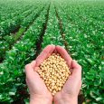 Os países da América Latina têm muitas coisas em comum, entre elas o destaque que a atividade agropecuária tem em sua economia. No Brasil, por exemplo, a boa safra do […]