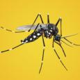 A OMS recomenda que os viajantes para qualquer ponto do estado, a partir do Brasil ou de outros países, tome a vacina contra a febre amarela com dez dias de […]