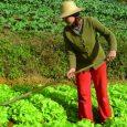 O Instituto Interamericano de Cooperação para a Agricultura (IICA) vai coordenar este ano no Brasil uma pesquisa sobre as mulheres e os jovens que vivem no campo. A intenção é […]