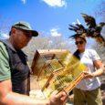 Cerca de 140 animais silvestres foram devolvidos à natureza nesta quarta-feira (7) em Alagoas. Eles foram apreendidos em condições irregulares, durante a 9ª etapa da Fiscalização Preventiva Integrada (FPI) da […]