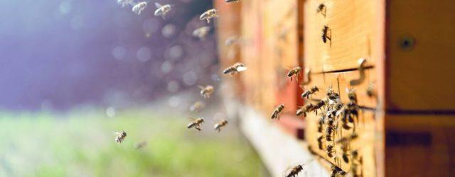 """Por meio do projeto, os pesquisadores poderão """"escutar"""" as abelhas – analisar dados acústicos complexos captados dentro das colmeias inteligentes, incluindo os movimentos de suas asas e patas. Com o […]"""