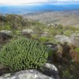 Sítio inscrito na Lista de Patrimônio Mundial Natural da UNESCO, a Costa do Descobrimento, no Sul da Bahia, reúne praias paradisíacas, recifes de corais, rio navegáveis, paisagens exuberantes, mas também […]