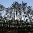 Quem caminha pelas florestas da França nessa época do ano pode ouvir os tiros. A caça faz parte da história do país há muitos milhares de anos. Pinturas rupestres encontradas […]
