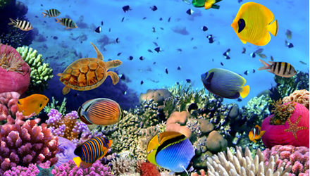 A redução da perda da biodiversidade e a promoção do uso sustentável de recursos naturais é um compromisso global assumido por 140 nações signatárias da Convenção sobre Diversidade Biológica (CDB). […]