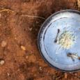 Dados do IBGE apontam que quatro em cada dez famílias brasileiras vivem em insegurança alimentar – um índice que vinha melhorando desde 2004, e agora piorou. Fome grave atinge 10,3 […]