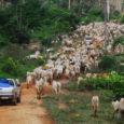 Pesquisa inédita do De Olho nos Ruralistas mostra registros de propriedades sobrepostos em até 100% dos territórios ancestrais; Cadastro Ambiental Rural (CAR) autodeclarado afirma-se como instrumento da grilagem e da […]