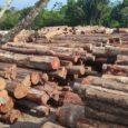 Nesta terça-feira, durante reunião do Brics, presidente Jair Bolsonaro anunciou que divulgará lista de países que criticam Brasil por desmatamento, mas compram madeira ilegal no país. por G1 e Jornal […]