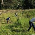 Registro ambiental foi elaborado e aplicado sem consulta às comunidades tradicionais; Conaq e ISA lançam em live nesta quinta-feira (19/11) um guia de consultas sobre o tema por Victor Pires, […]
