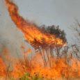 Artigo deEduardo Cyrino Oliveira-Filho [EcoDebate] A presença do fogo é um evento frequente, particularmente no Cerrado brasileiro, onde faz parte, inclusive, da ecologia de várias espécies. Logicamente, o fogo provocado […]