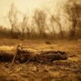 por Climainfo Orelatório finalda comissão externa da Câmara dos Deputados, que acompanhou a resposta do governo federal às queimadas no Pantanal, concluiu que a maior parte dos incêndios teve origem […]