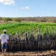 Criatividade de pequenos produtores de Petrolina-PE revela novas alternativas às lógicas do agronegócio. Luta por autonomia une saberes locais a práticas sustentáveis avançadas – e pode combater a pobreza rural […]