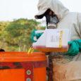 Estudo constatou que regiões próximas a lavouras de soja, onde o veneno é amplamente usado, tiveram aumento de mortes prematuras e malformação de fetos. Pesticida contamina solo e recursos hídricos, […]