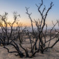 Gases de efeito estufa e poluição por aerossóis emitidos por atividades humanas são responsáveis por aumentos na frequência, intensidade e duração das secas em todo o mundo, segundo pesquisadores da […]
