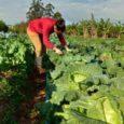 A bolsonarista Cristina Malcher possui duas fazendas de 2.178 hectares e é conselheira da Federação da Agricultura; o pecuarista Edilson Oliveira, casado com atual prefeita, não declarou gado;lei prevê pelo […]
