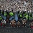 Das 15 comunidades da região do Palimiu, dentro de reserva indígena, ao menos 4 já foram alvo de ataques de invasores por Martha Raquel, via Brasil de Fato Garimpeiros ilegais […]