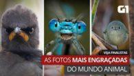 Candidatas flagraram pássaros mal-humorados, macacos que se exibem e peixe que pula. Campeã será anunciada em 22 de outubro; público pode escolher a vencedora do voto popular. Por G1 O […]