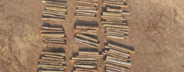 Em carta, grupo afirma compromisso com o combate às mudanças climáticas e defende ações eficazes para a preservação do meio ambiente e o cumprimento das metas de combate ao desmatamento […]