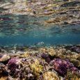 Segundo o documento, a área perdida é maior do que todos os corais vivos na Austrália Por France Presse, via G1 Um relatório divulgado nesta terça-feira (5) pela organização Global […]