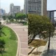 Falta de cobertura verde na região metropolitana de São Paulo aumenta casos de ansiedade Estudoda Faculdade de Medicina avaliou o impacto do ambiente urbano e da infraestrutura verde na saúde […]